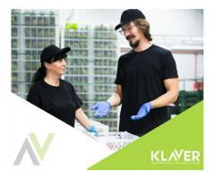 Produkcja/magazyn - praca w Holandii bez stawki wiekowej